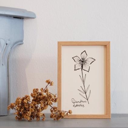 Carte printemps Dianthus noir et blanc