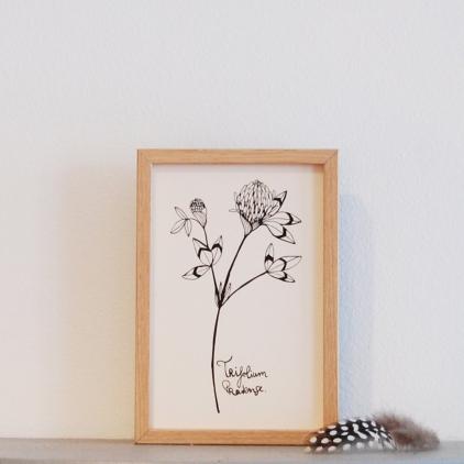Carte printemps Trifolium noir et blanc