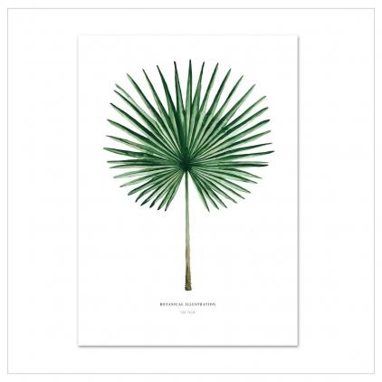 Affiche A4 Fan palm