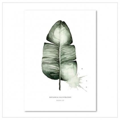 Affiche A3 Banana leaf