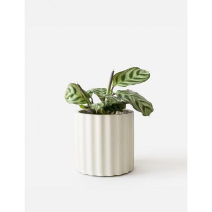 Mila Planter - Silver Green