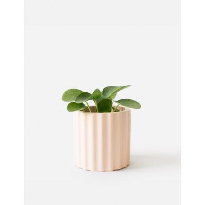 Mila Planter - Millenial Pink